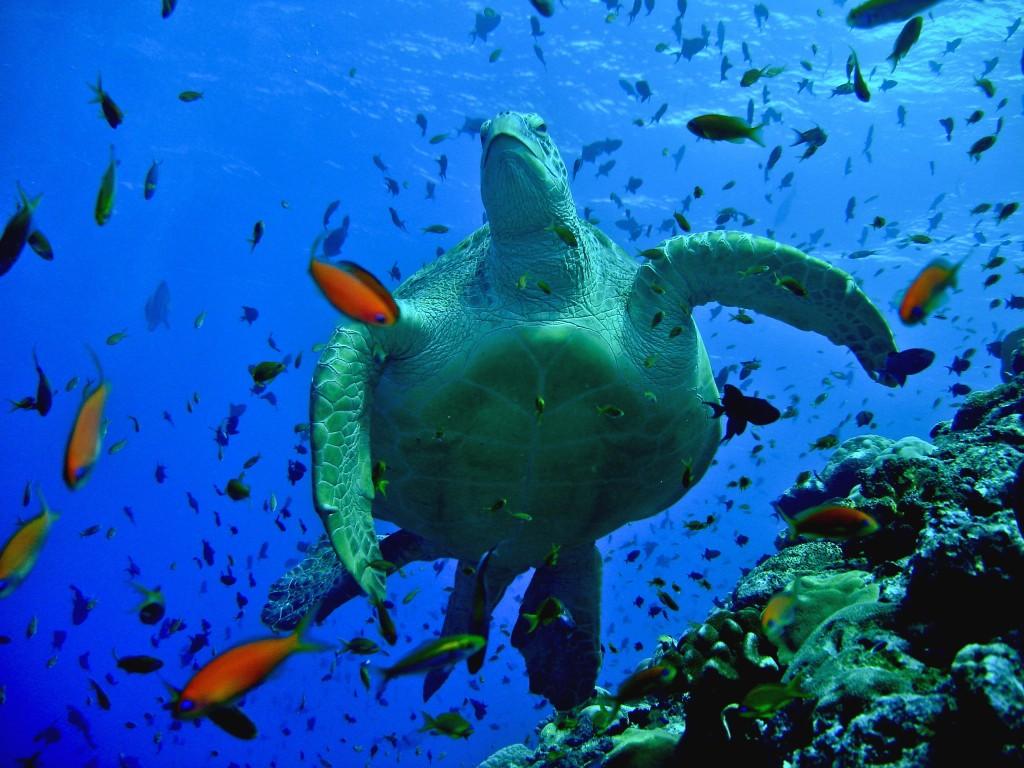 maldiverna-7
