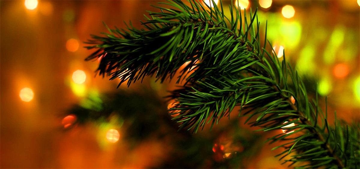 jakten på julgranen